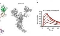 疫情当前结构先行!继新冠病毒刺突蛋白之后,其受体结构全长被解析