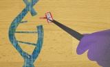 "Cell:""魔剪""CRISPR""神助攻"",让CAR-T疗法告别毒性!"