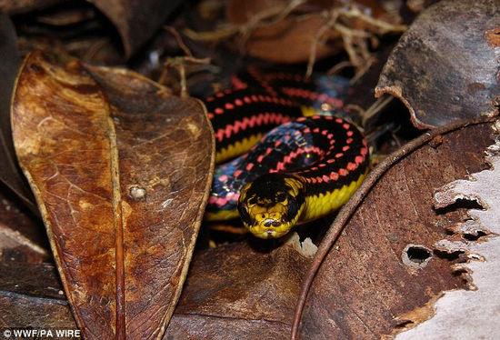 马达加斯加岛发现的珍奇动物-图库-生物探索