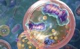 深度长文!细胞自噬在健康和疾病中的作用