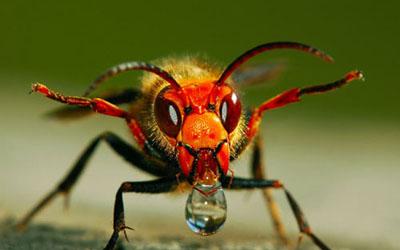 马蜂身体结构图