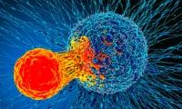 【Nature】人类可能无法实现针对COVID-19的群体免疫