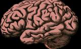 意外!婴儿期大脑发育或将预测儿童智商