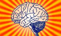 Neuron:人脑进化的关键,竟然是像癌细胞一样疯狂的新陈代谢!