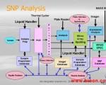 SNP分析流程示意图