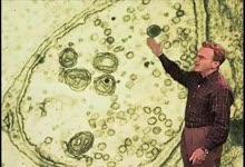 Schekman:神经元的突触囊泡融合