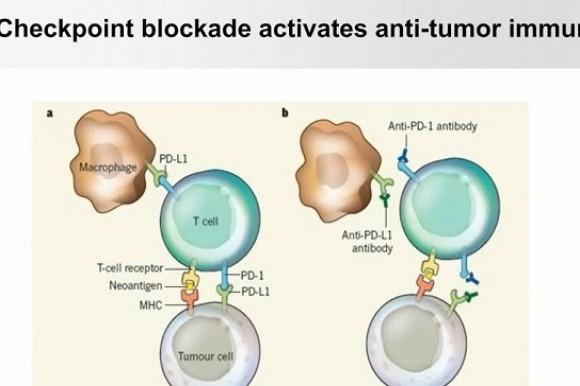免疫肿瘤学研究新发现:PD-L1的糖基化和三阴性乳腺癌的免疫治疗