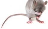 拯救遗传性失明,科学家发现261个新致病基因