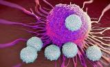 """惊人发现!Cell子刊:这种免疫细胞竟是肺癌""""帮凶"""""""