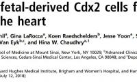 PNAS:心脏修复新曙光!胎?#35848;?#32454;胞能再生心肌