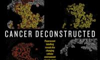 """Nature封面:没有""""腐败""""不了的好细胞,只有不""""努力""""的癌细胞"""