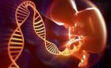 基因编辑婴儿试验注册申请已被驳回