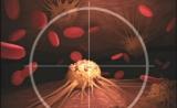 我国建成国际规模最大的激酶靶点细胞筛选库