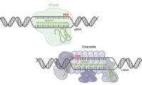 媲美CRISPR-Cas9, 新CRISPR 工具探知90%的基因编辑领域
