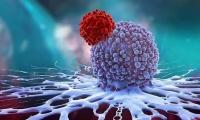Nature:CRISPR筛选发现关键基因,让抗肿瘤T细胞疗法更强大、更持久