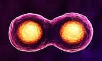 全球骨髓浓缩物市场最新报告 细胞疗法成为骨科市场的新主流