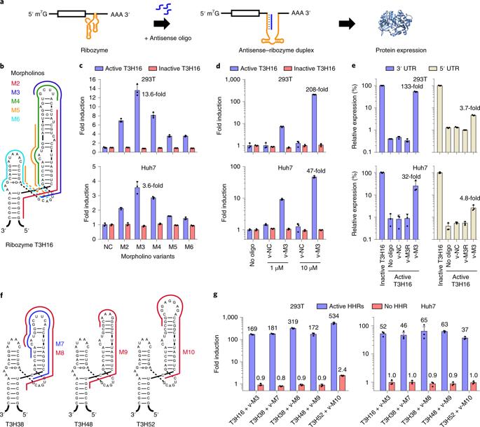 可逆的RNA开关控制基因表达,调节基因疗法剂量