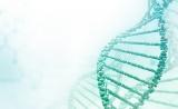 重磅!首个北京鸭三维基因组研究登顶Nature子刊