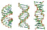 Science:科学家在单细胞水平上研究表观遗传调控的动力学变化