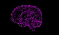 大腦如何平衡快樂和痛苦?可能是引起抑郁癥的又一原因