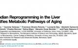 """两篇Cell共同揭秘:热量限制为何能延缓衰老——让你有一个""""年轻""""的生物钟"""