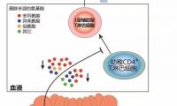 上海药物所等揭示GV-971通过靶向肠道菌群发挥其抗阿尔茨海默病作用