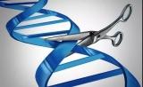 细胞存活率提高7倍!更精准的CRISPR诞生了