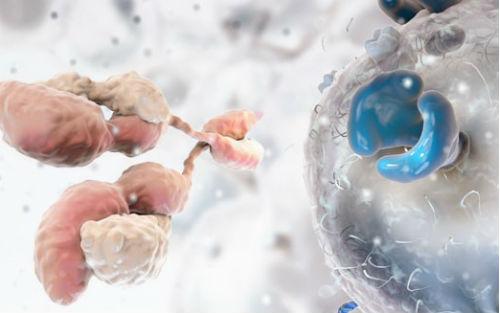免疫疗法:艰辛的抗癌战争终于迎来了转折点?