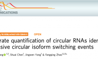 Nature子刊:趙方慶團隊提出環狀RNA定量和可變剪接體轉換識別的新方法