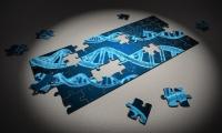 """可解释人类进化的关键基因""""现身"""