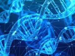 """""""人体基因、胚胎""""法律规范写入民法典人格权编草案"""