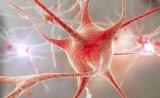 专访中国科大熊伟教授:质谱技术让神经科学进入单细胞研究时代