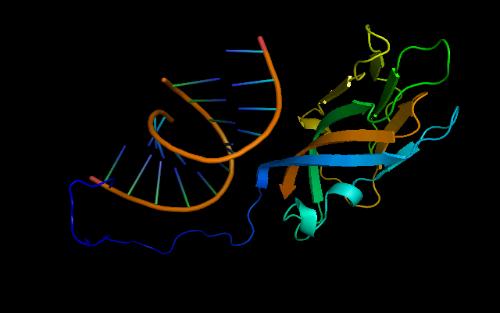 肌线虫包囊的形态结构图