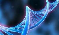"""代際傳遞不是遺傳的唯一方式?跨物種間""""借基因""""再添新證據"""