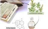 """德科学家用植物""""废料""""合成青蒿素:仅15分钟,更高产廉价"""
