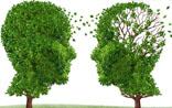 女性更容易患老年痴呆!大脑功能的性别差异究竟有多大?