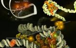 Science:表观遗传重要复合物的综述