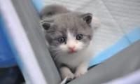 """国内首只自主培育的克隆猫诞生,它叫""""大蒜"""""""
