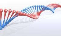 Cell子刊 | 脑袋和肚子长得不一样, 胚胎发育学家基因启动子上找答案