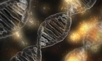 Nature:新型基因片段有望帮助开发抵御癌症和自身免疫性疾病的新型疗法