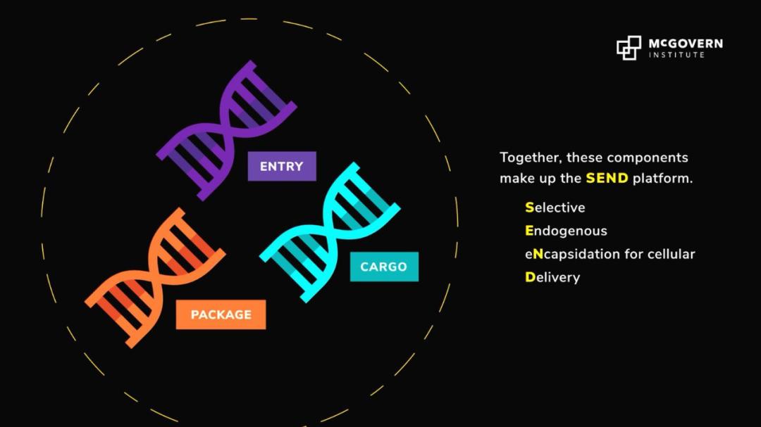 无极4登录地址Science重磅:张锋领衔开发全新mRNA递送平台SEND,开辟分子疗法递送新方法