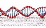 超级百岁老人的基因里,真的有长寿密码么?