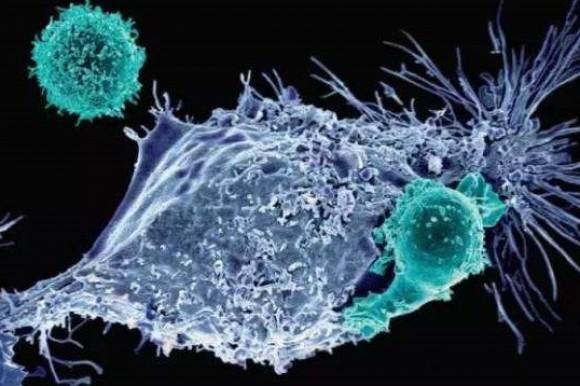 康宁杰瑞PD-L1-CTLA-4双靶抗体澳洲临床试验进行中,中国可期