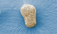 Nature:科學家建立人類胚胎三維模型,有望揭秘出生缺陷和不孕的原因