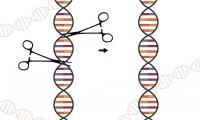 基因治疗靠谱吗?临床首次证实CRISPR-Cas9技术可有效治疗镰刀型红细胞贫血和β-地中海贫血