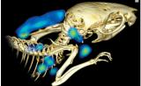 Nature:抗体成像助力癌症研究
