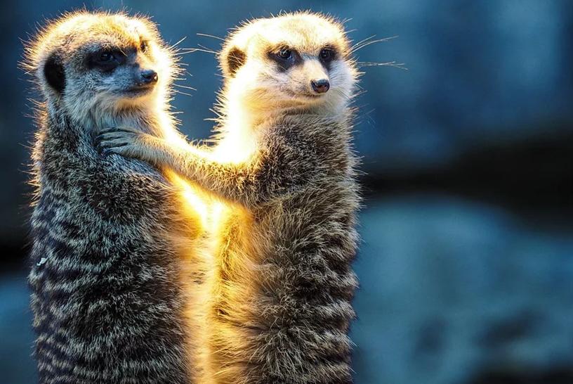 Nature关注:冠状肺炎疫情后,中国将如何禁止野生动物贸易?