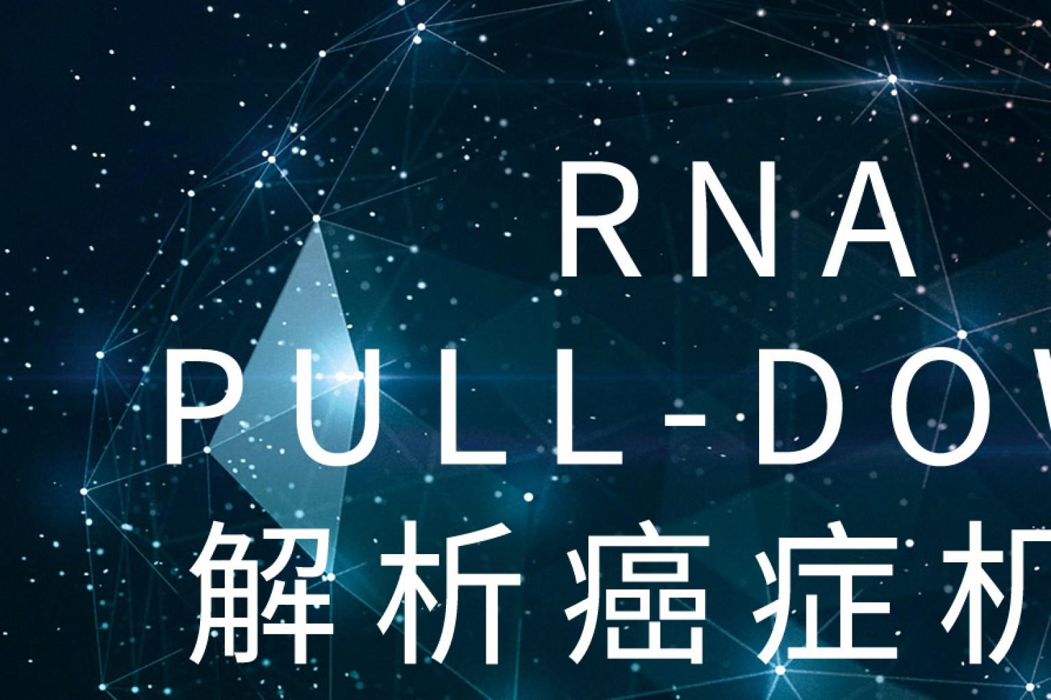 看!10分文章中的RNA pull-down如何七十二变