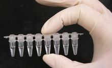 PCR技术年度盘点:2013年新趋势