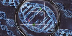 寻找KO的阳性克隆--Cruiser special 突变检测试剂盒